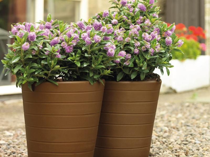cast_bronze_plant_pots